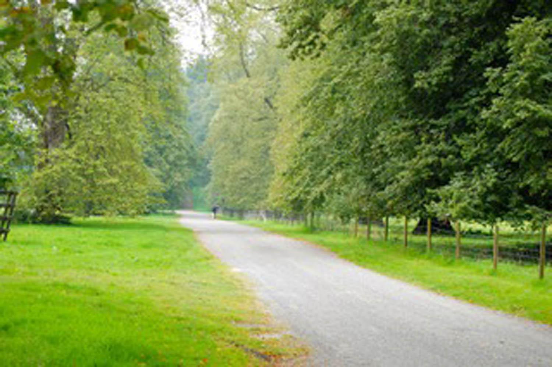 lush greenery along north bound road in Scotland