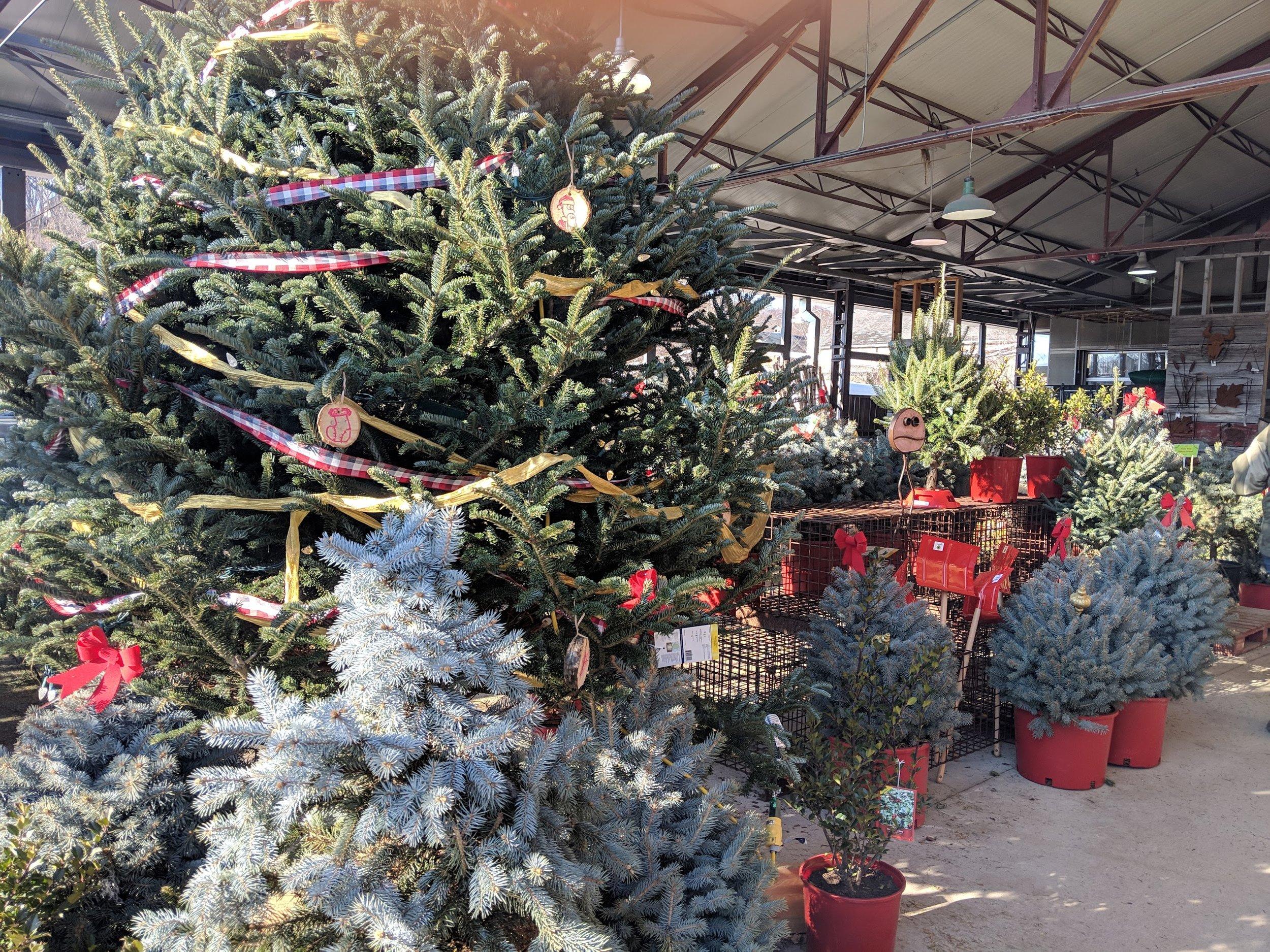 Christmas-tree-shopping-Green-Market-Toronto-Winter-Village-Toronto-family-lifestyle-photographer.jpg