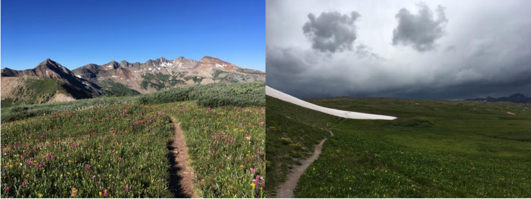 The beauty and danger of the Colorado Trail. L: wildflowers in the San Juans. R: angry afternoon weather, with no shelter in sight.