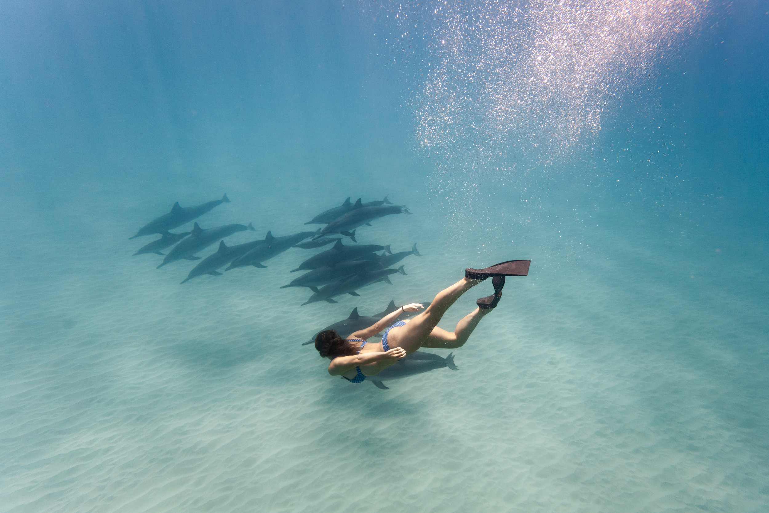 Asia captured this photo of a guest diving with a pod of dolphins