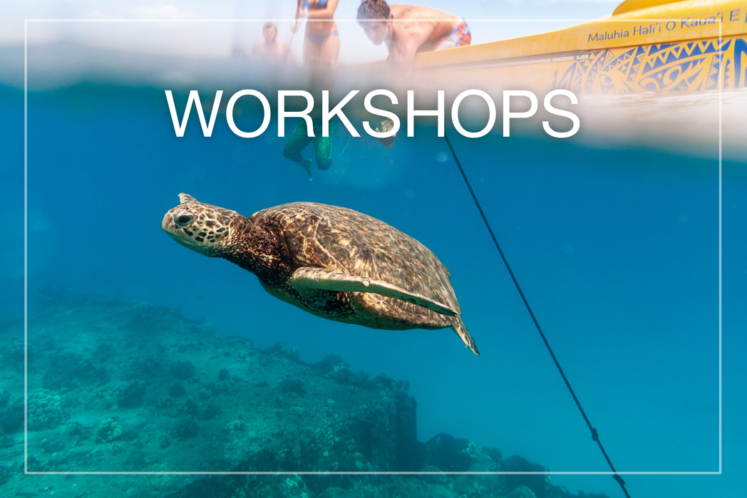 Take an underwater or landscape photography workshop