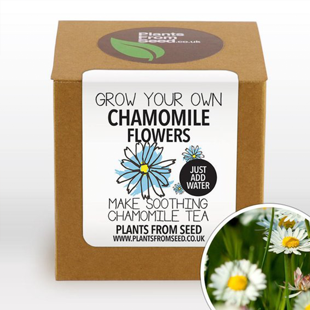 Chamomile flower box.png