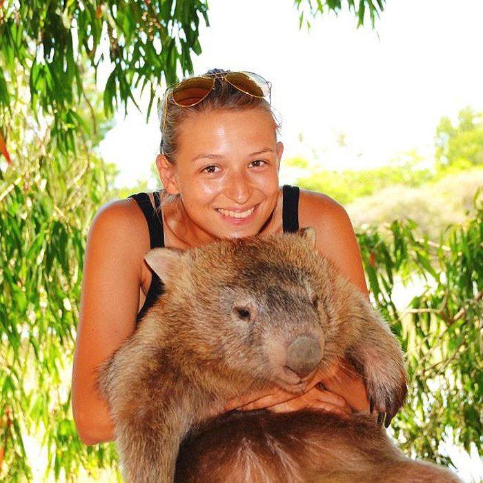 Wombats at Billabong Sanctuary