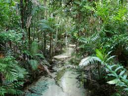 Fraser Islands Rainforest