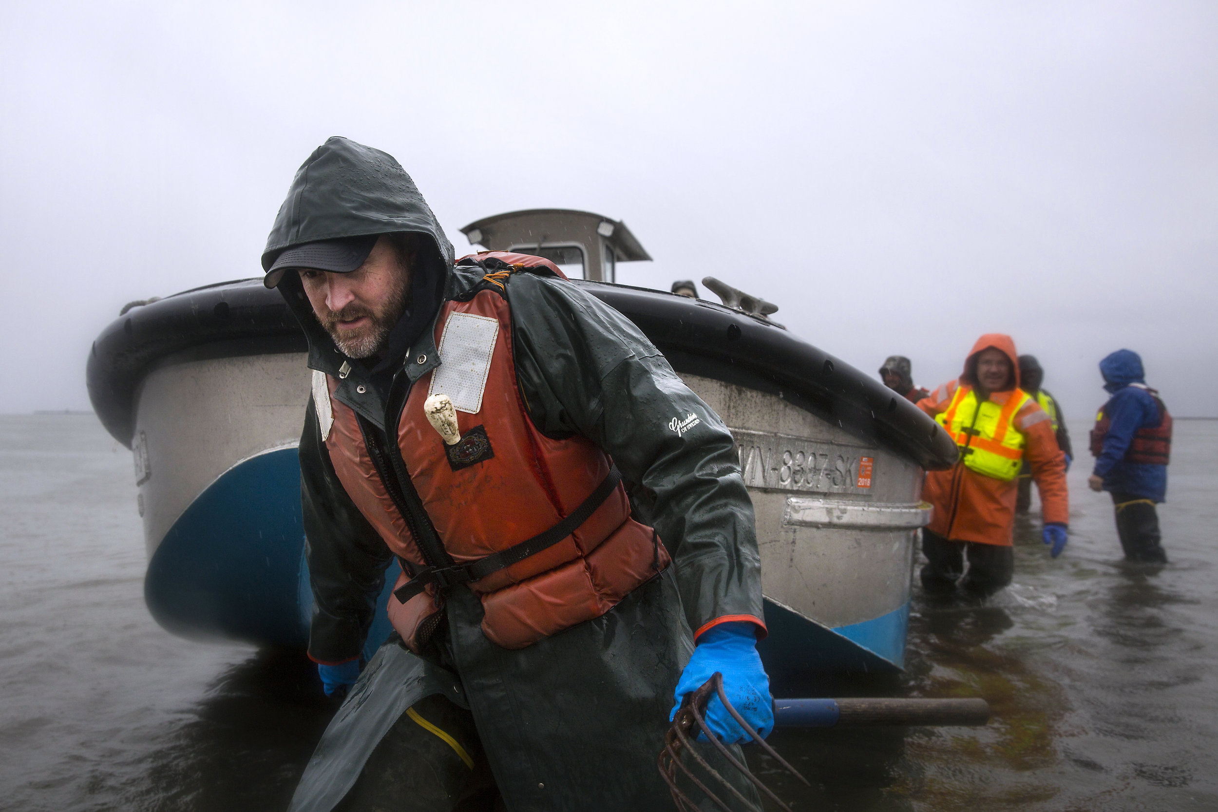 Jason Ragan, director of clam and oyster farming at Taylor Shellfish, pulls a boat in to the shore to take workers on a tour of their Sammish Bay farms, Thursday, March 22, 2018, near Bellingham. (Sy Bean / Seattle Refined)