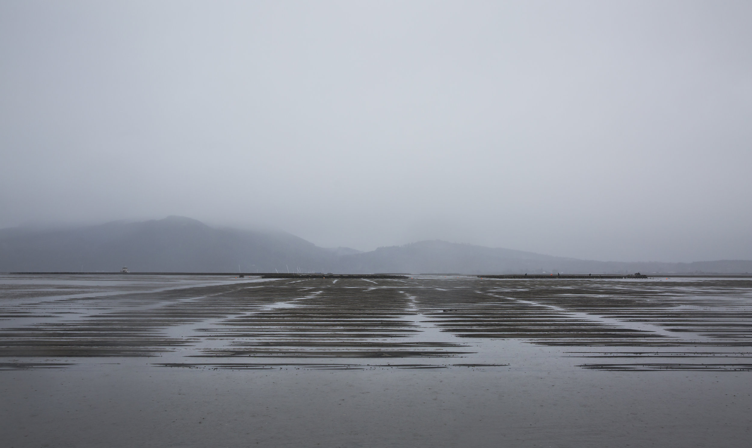 Clam tunnels stretch as far as the eye can see in Samish Bay.