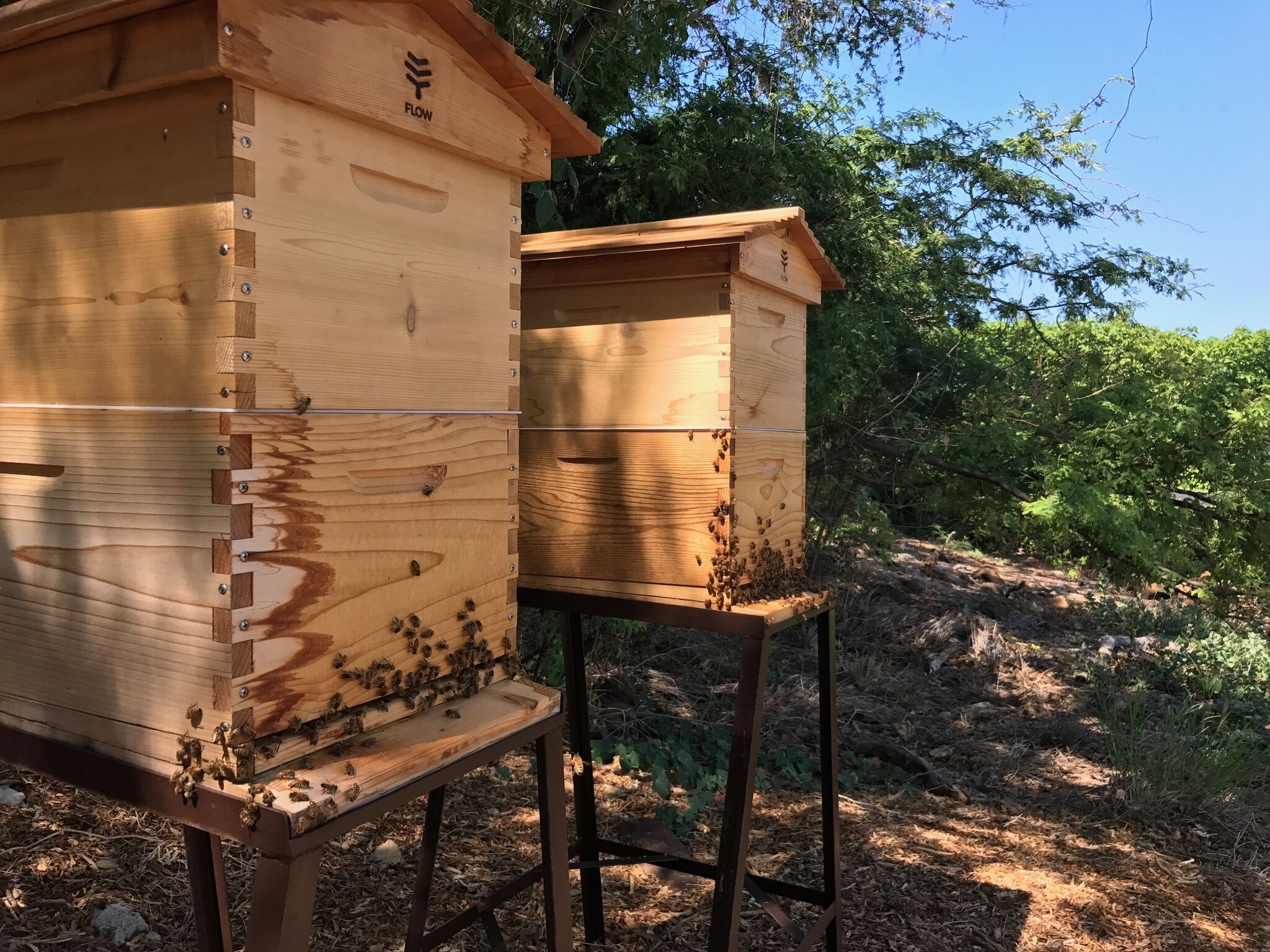 MK New Bee Hives.JPG