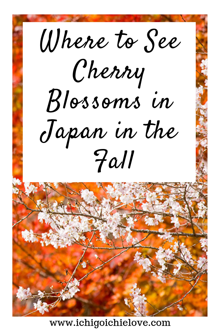 Where to See Cherry Blossoms in Japan in the Fall.png