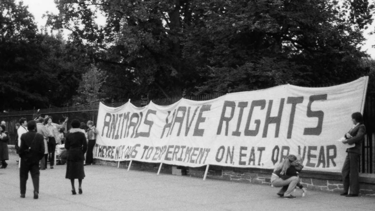 Image 1980:  Slideshow - PETA's Crusade Against Animal Research