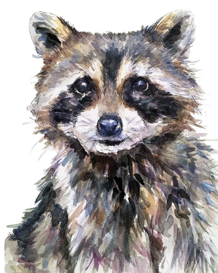 Raccoon-8x10.jpg