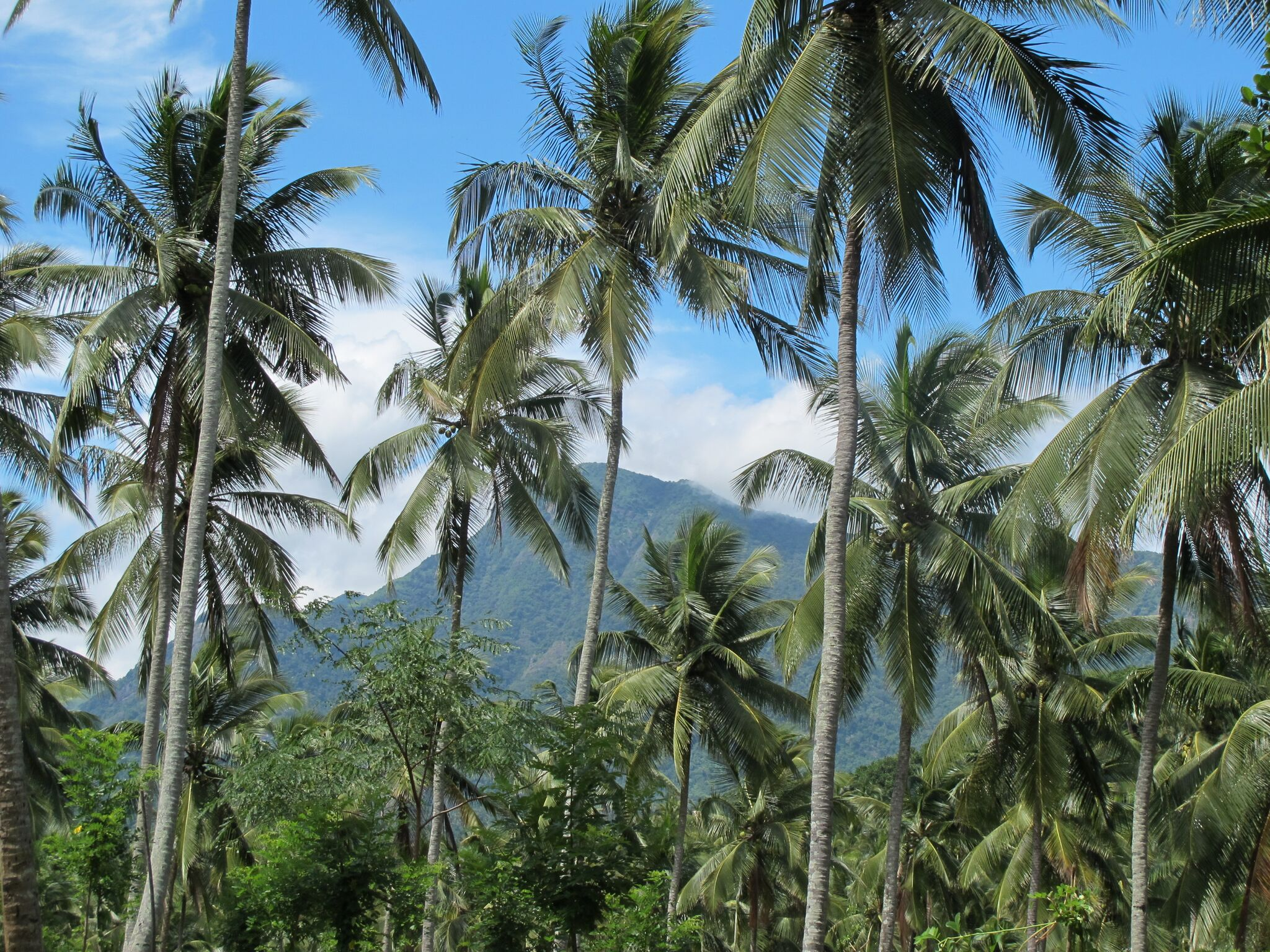 rejuvenate in Tropical greenery - InSpiral Escapes to Sri Lanka 5th-15th November 2018