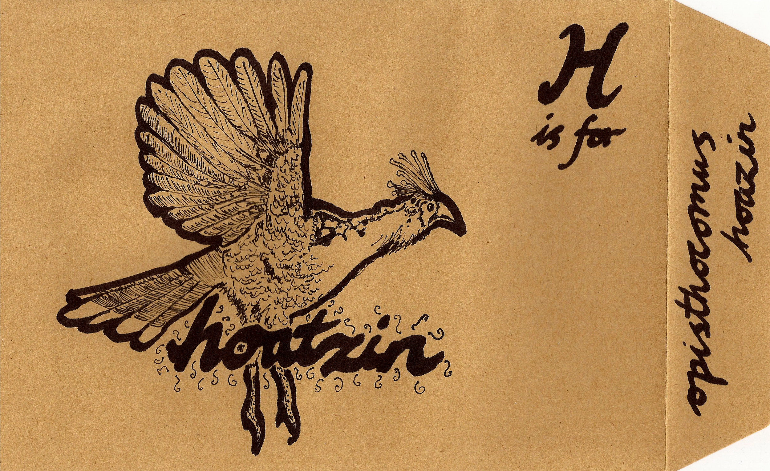 Hoatzin.jpg