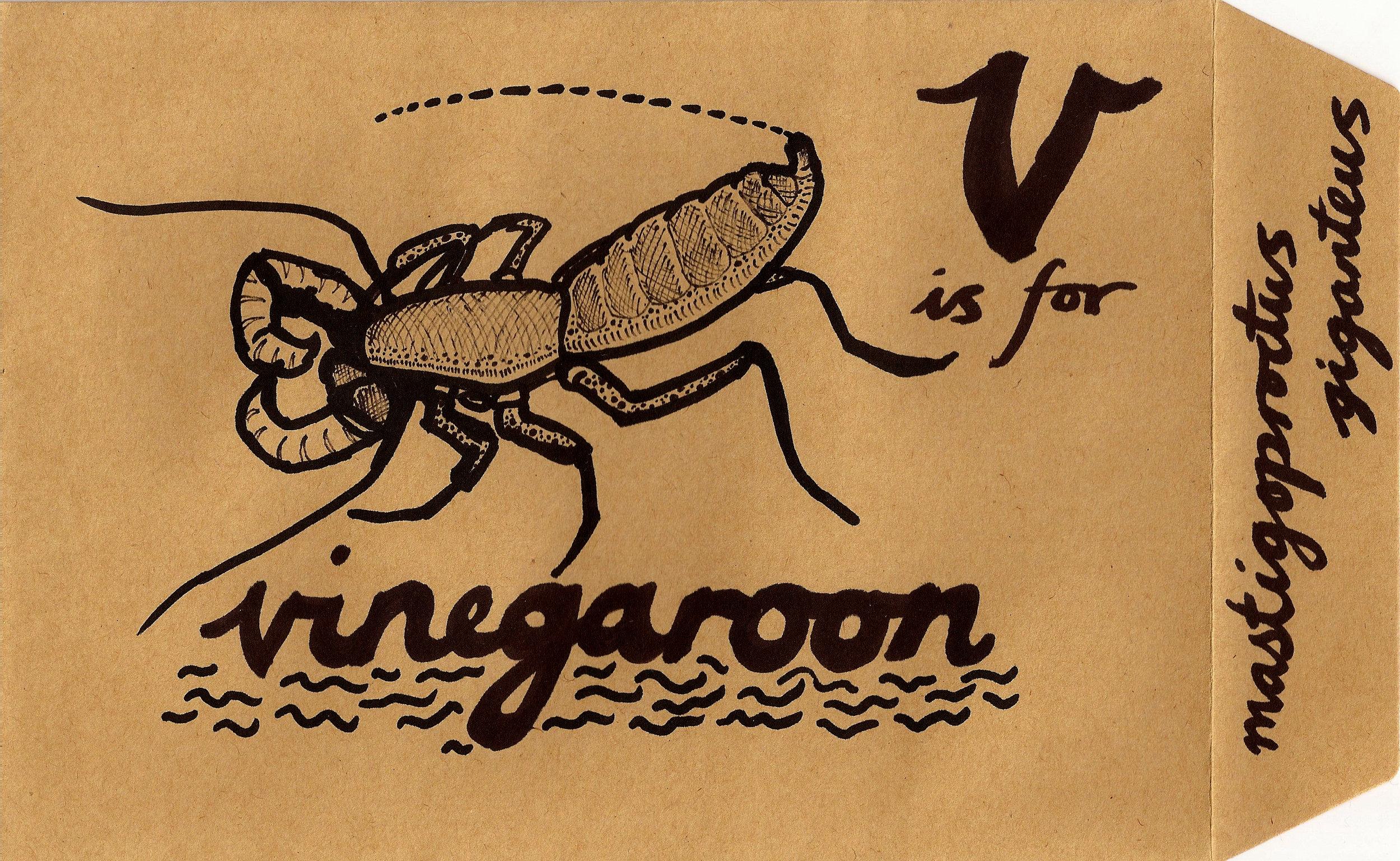 Vinegaroon.jpg