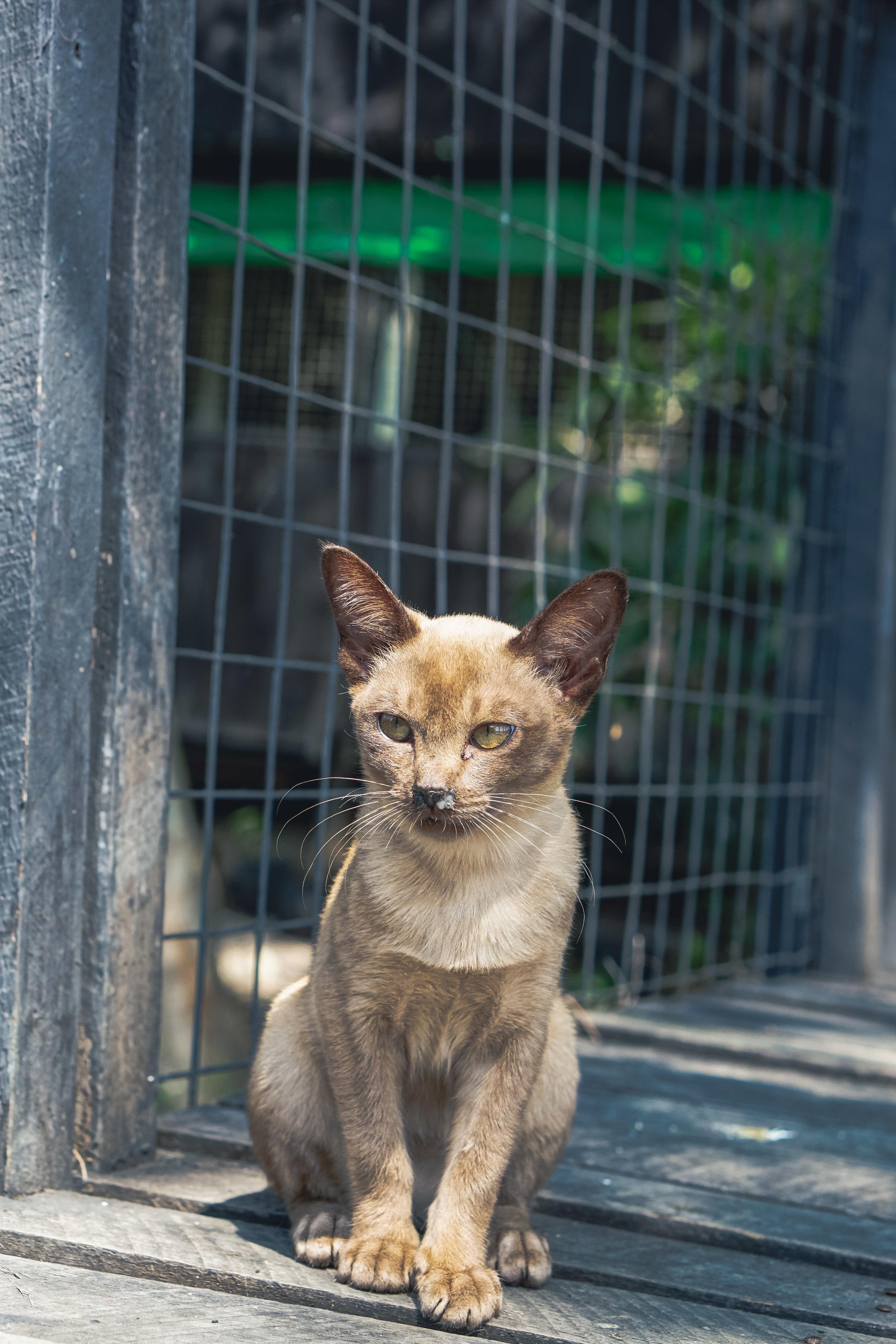 Cat Village Myanmar
