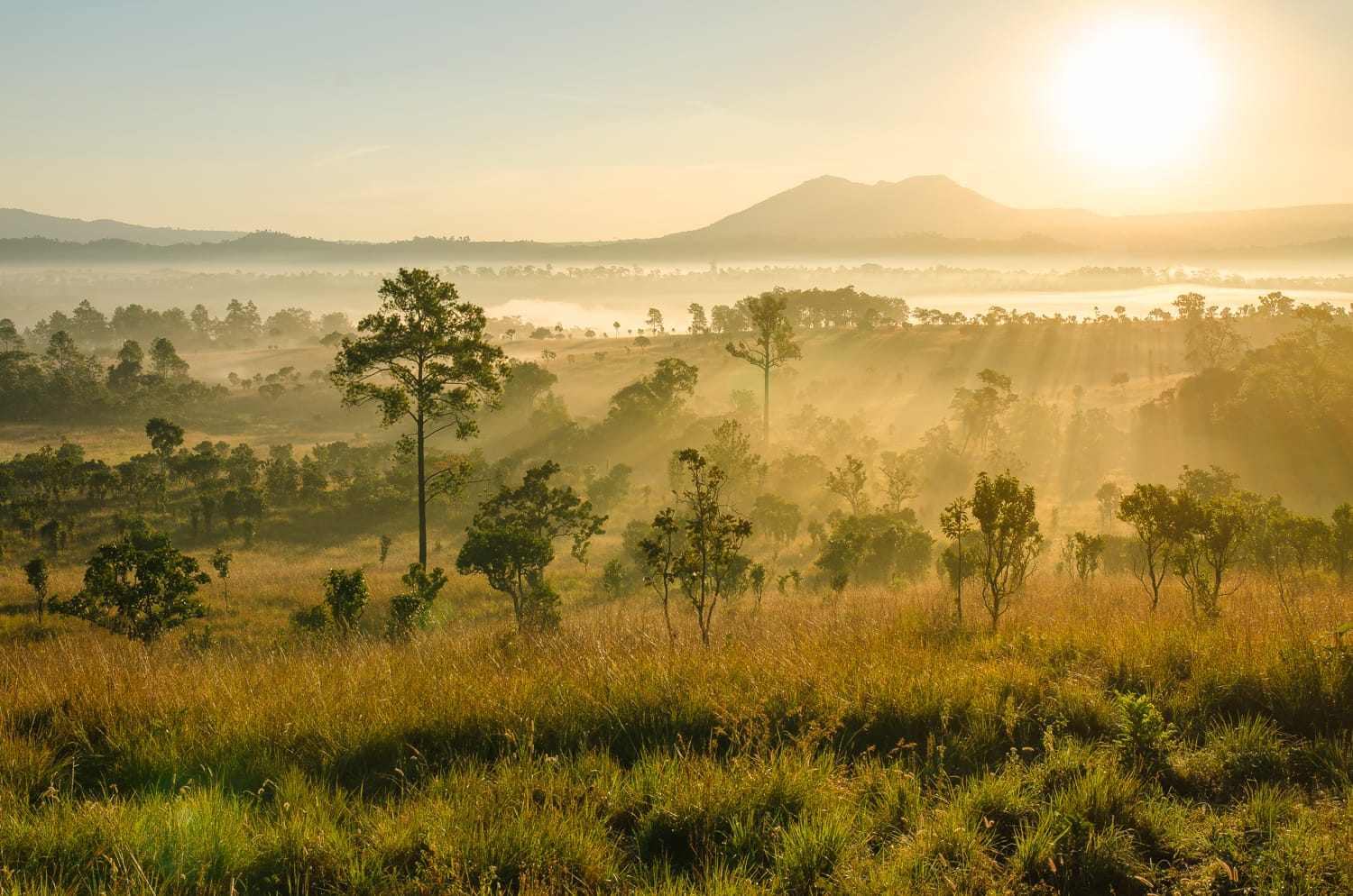 Thung Salaeng Luang National Park in Thailand