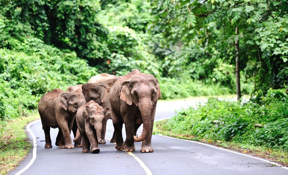 Khao Yai national park Thailand