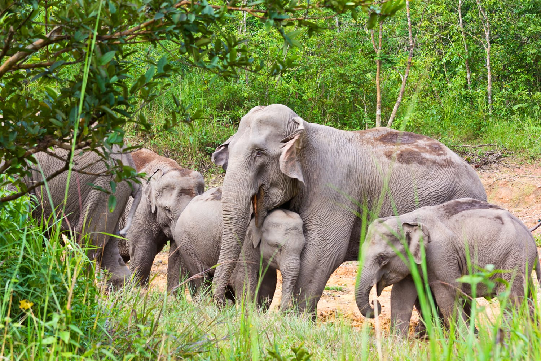Kui Buri National Park in Thailand