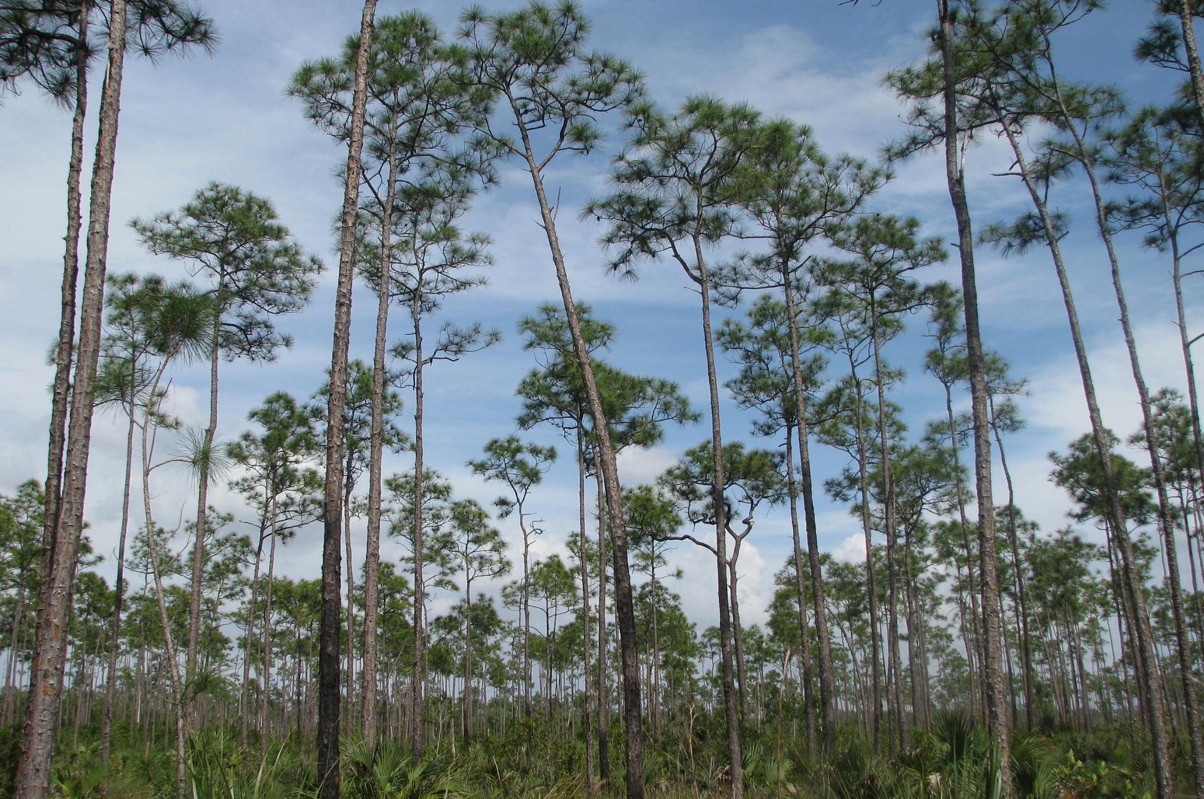 Miami Everglades National Park
