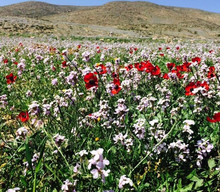 Desert blooms_small.jpeg