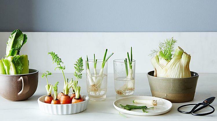 Growing-Food-From-Scraps_Garden-Seasons-Ultimate-List.jpg