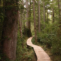 Review of the Ozette Trail - OlYMPIC NATIONAL PARK Trails