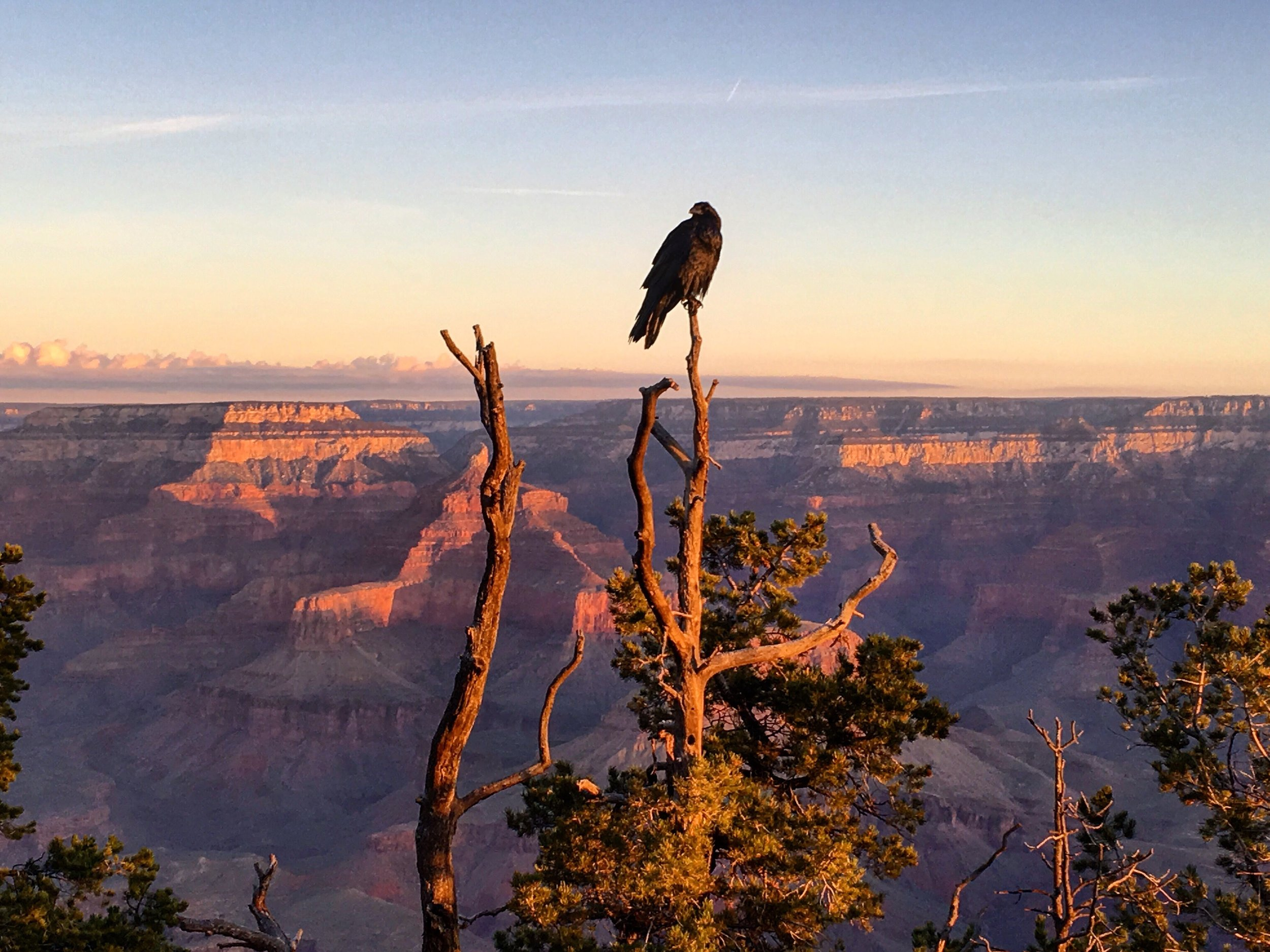 #1 Best NAtional park  in the Southwest usa: Grand canyon National Park (Arizona)