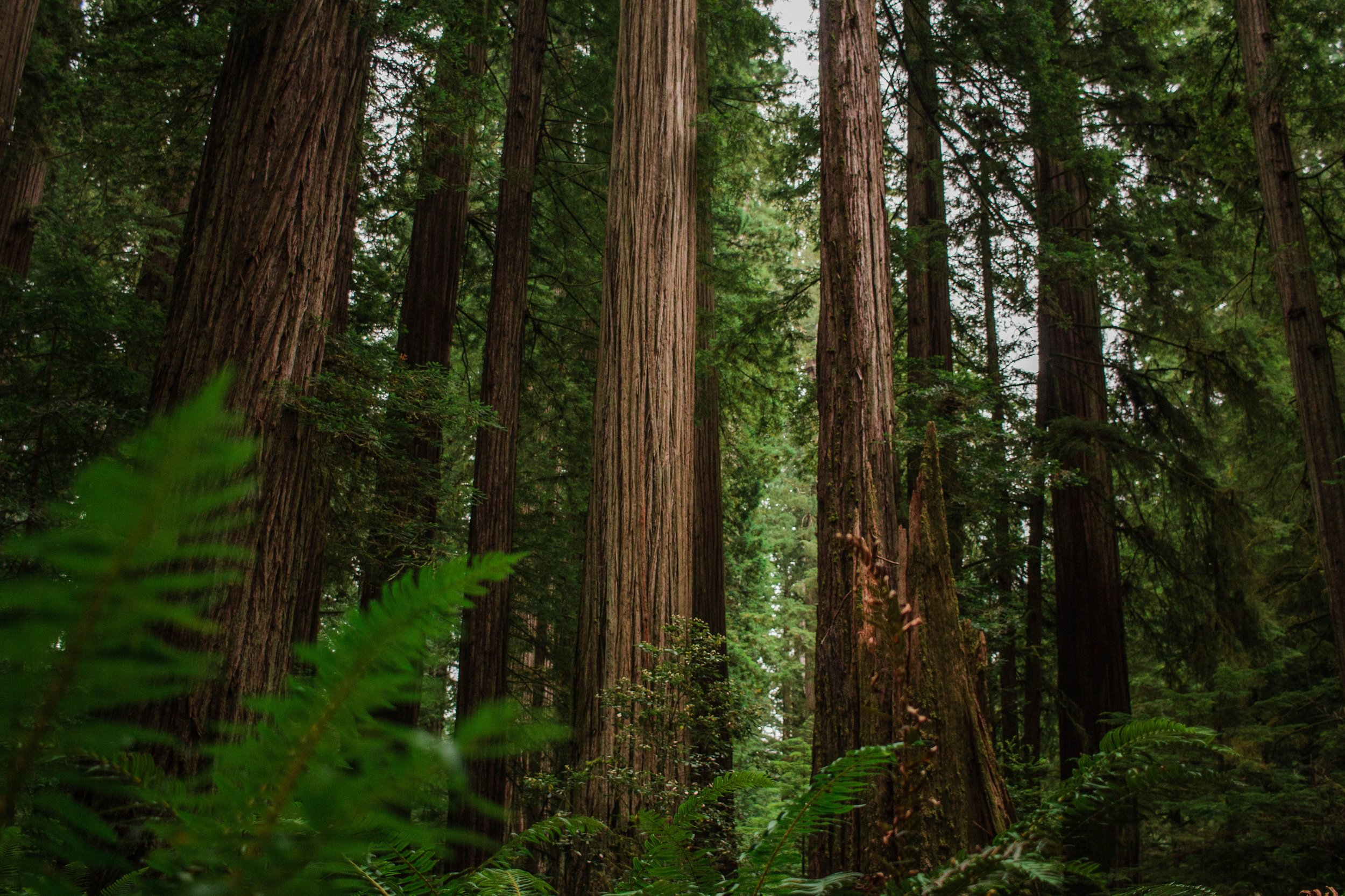 List of best national parks on the west coast : #2 Redwood national park