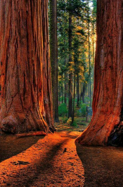 One of the best national parks in california : #2 ranked redwood national park