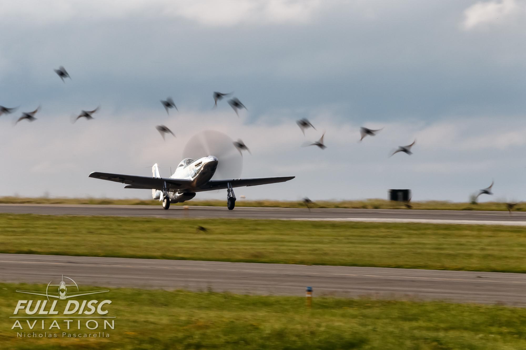 andrewmckenna_fulldiscaviation_nickpascarella_mustang_p51_takeoff_birds.jpg