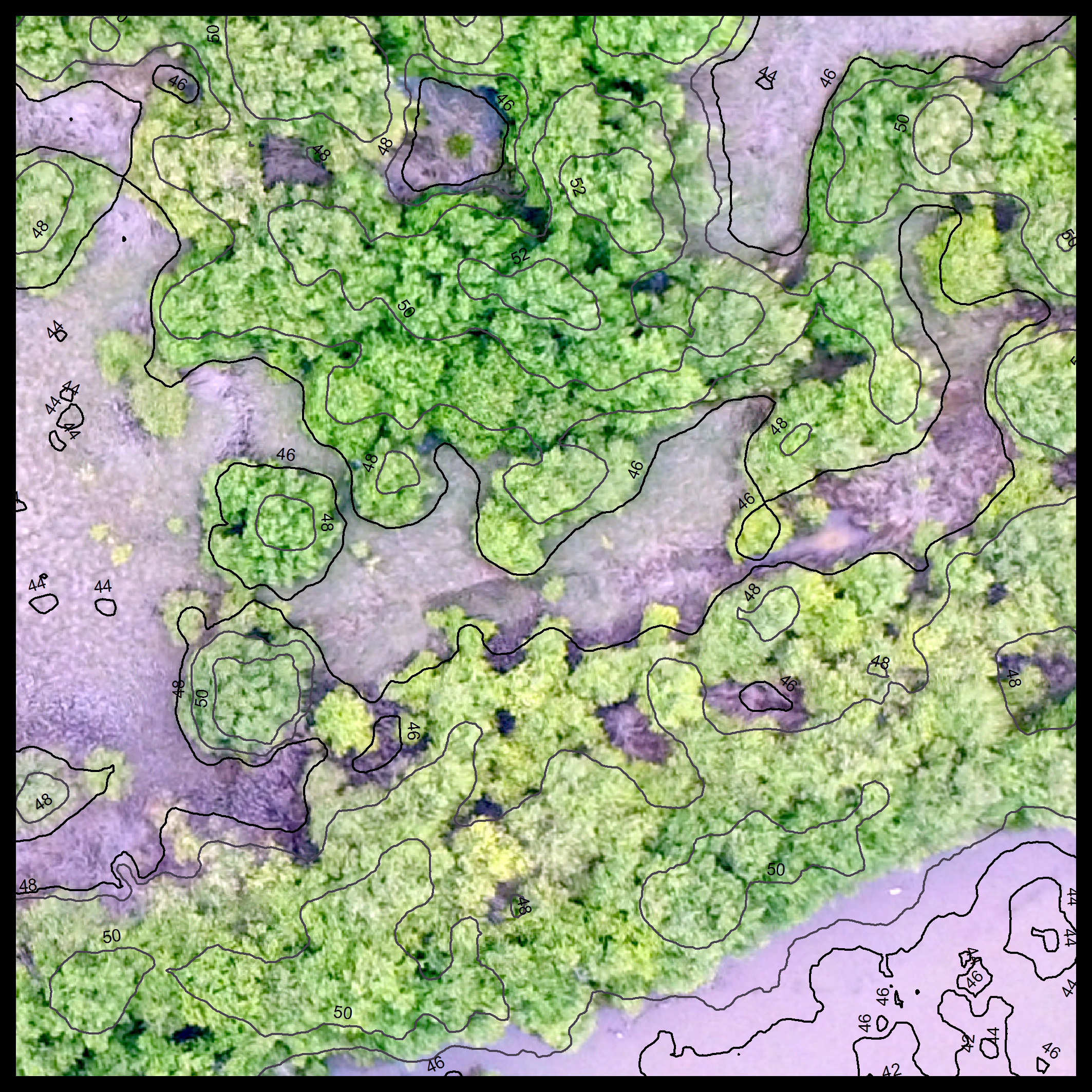 We use imagery from UAVs to calculate the heights and volume of individual mangrove trees, and can use this information to calculate the above-ground carbon stock within a given area.