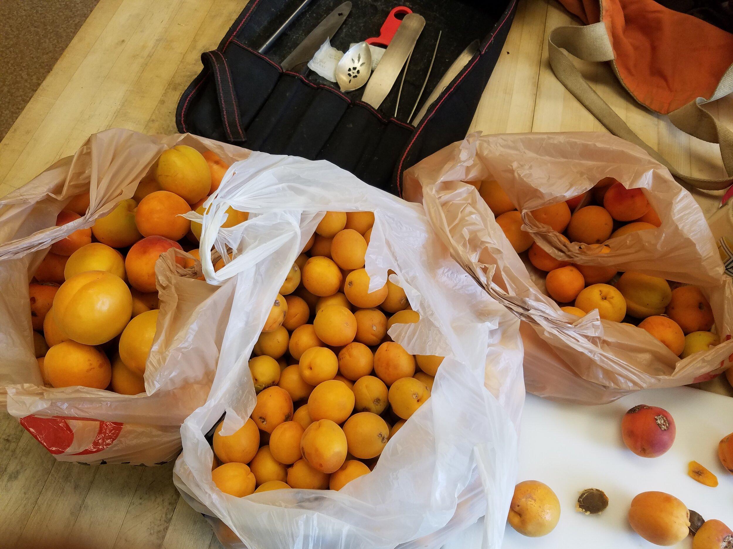 Neighborhood Apricots