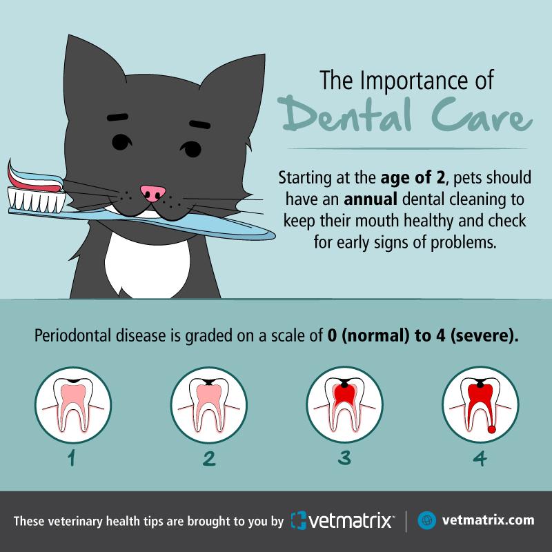 VetMatrix_Dental_Social_Post_1.jpg