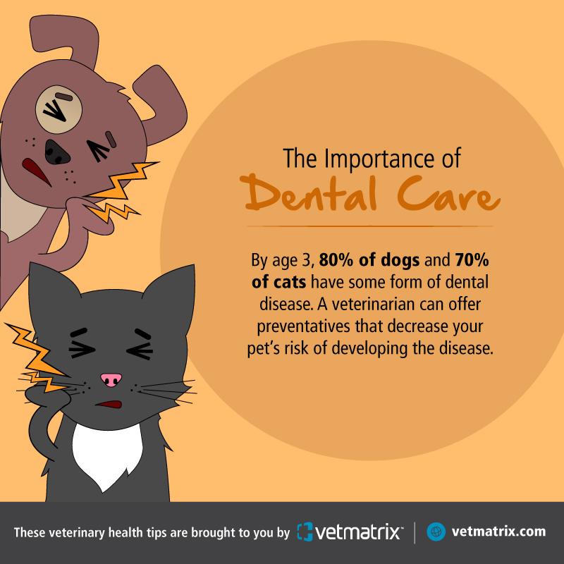 VetMatrix_Dental_Social_Post_2.jpg