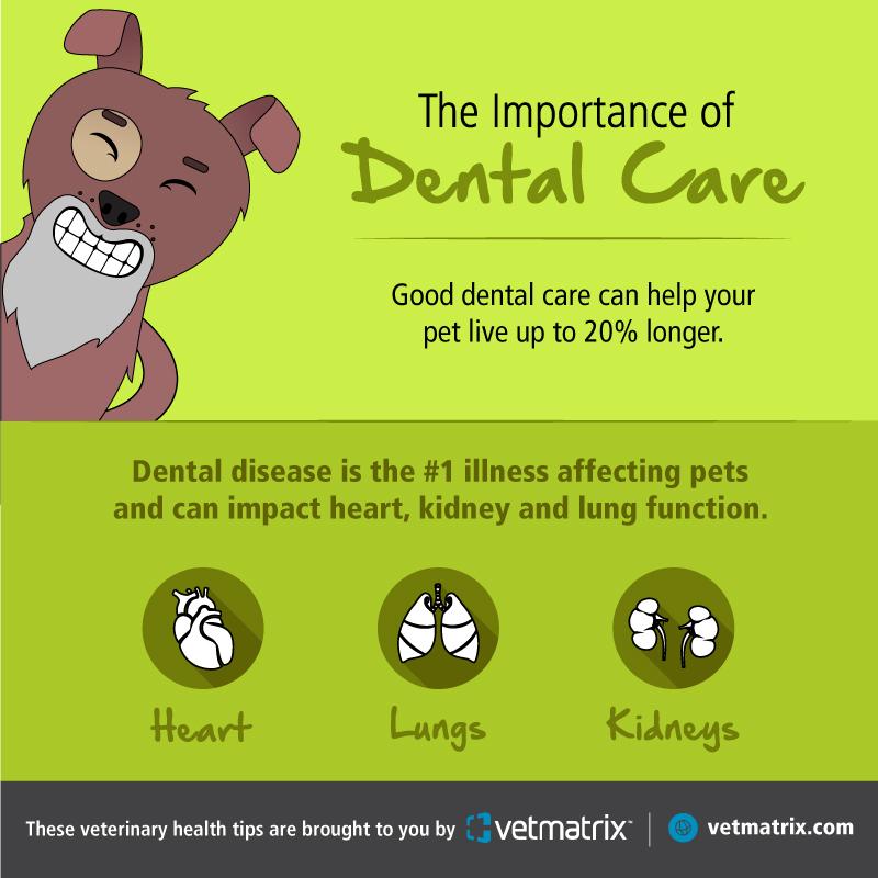 VetMatrix_Dental_Social_Post_3.jpg