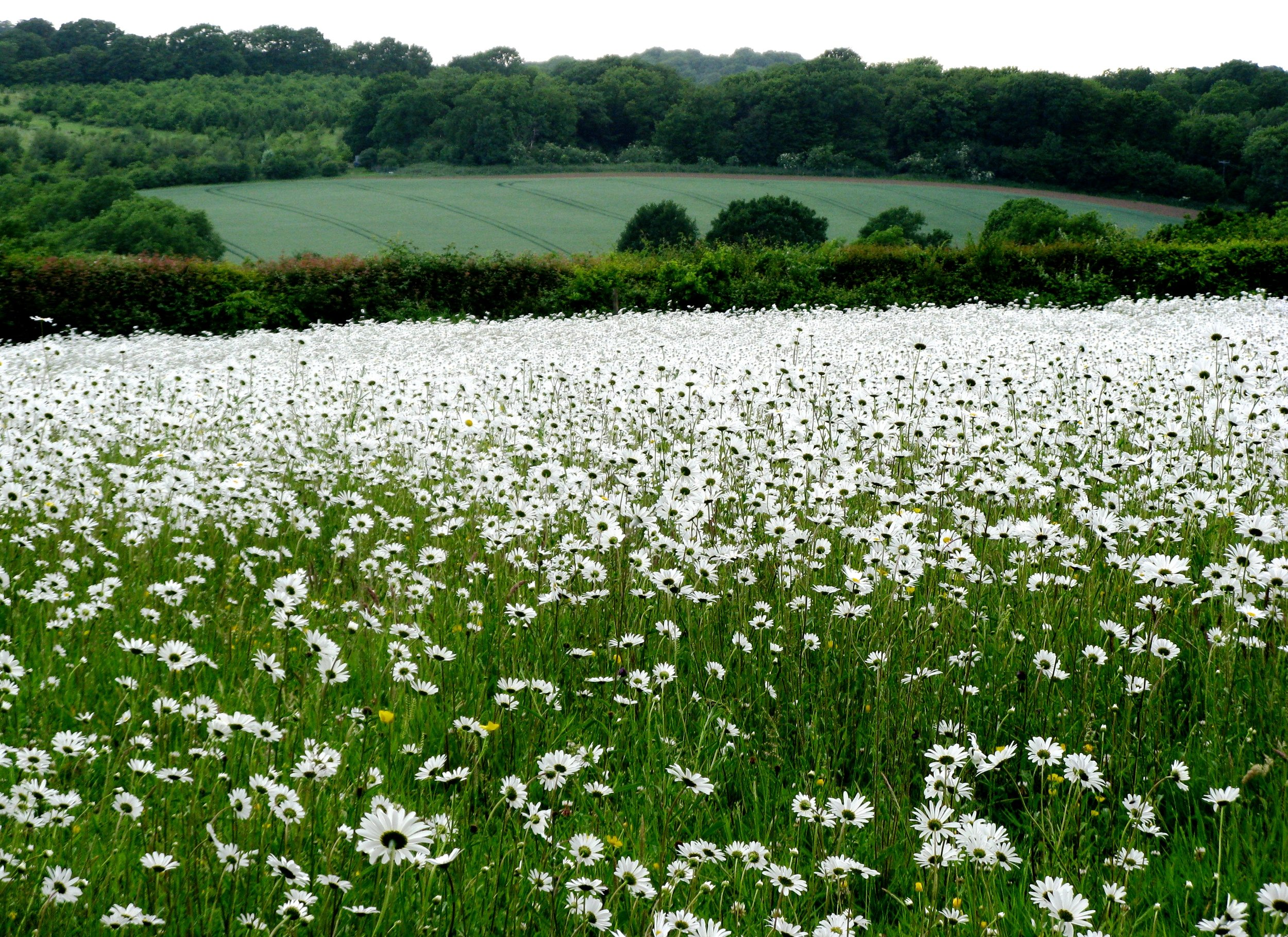 meadow-8.jpg