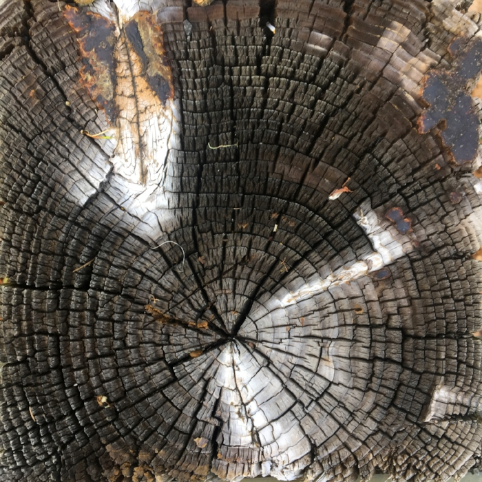 Tree rings near one of my favorite hiking spots in Eugene, Oregon, February 2018.