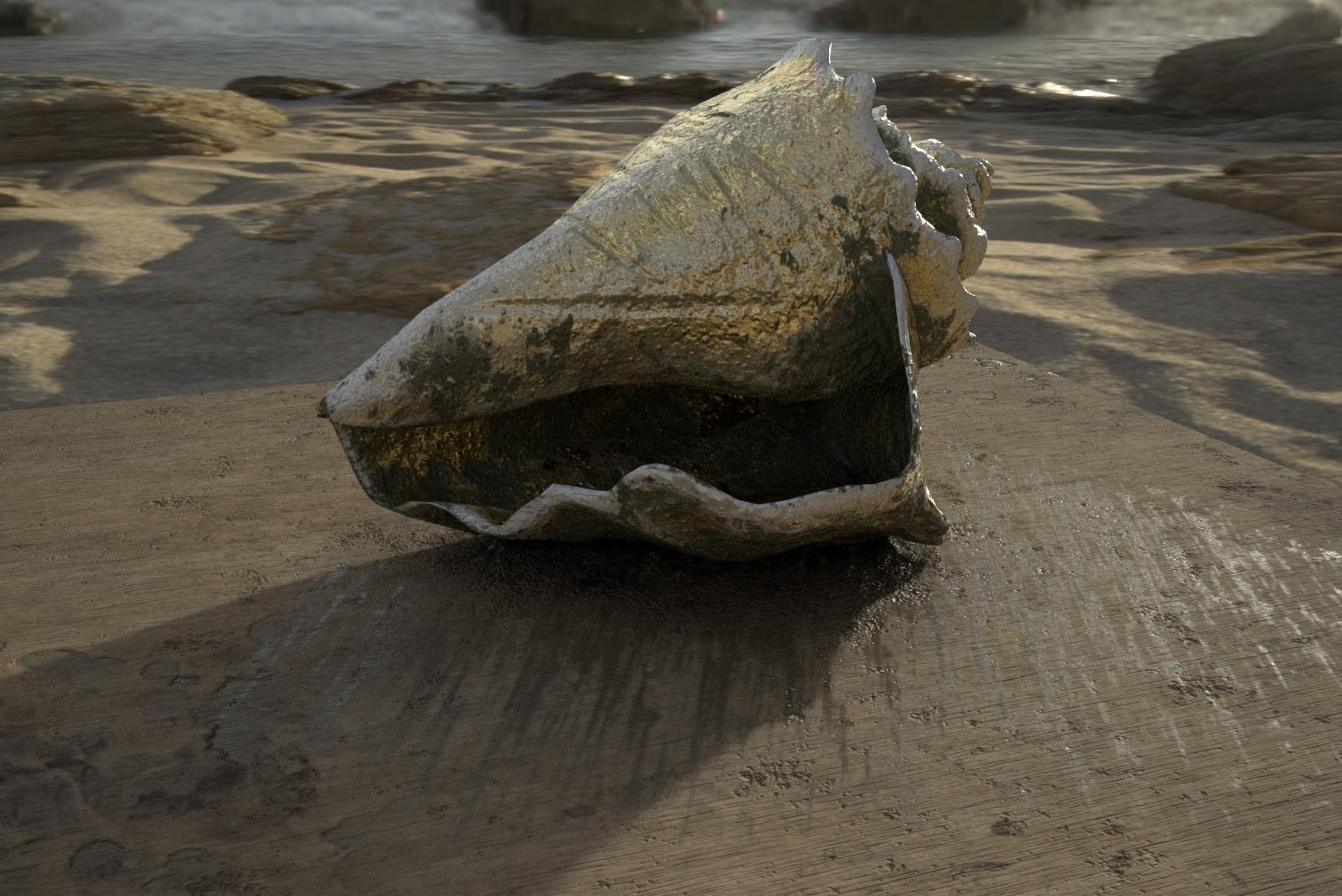 Conch Shell AR.jpg