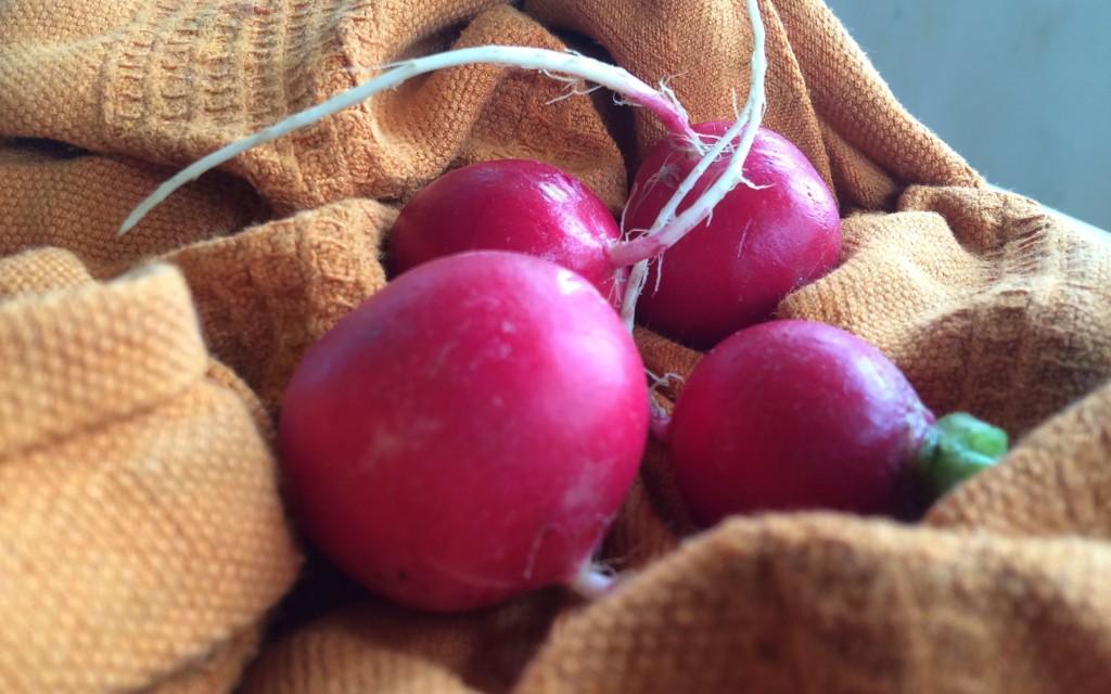 radish butter and willingness | a raisin & a porpoise