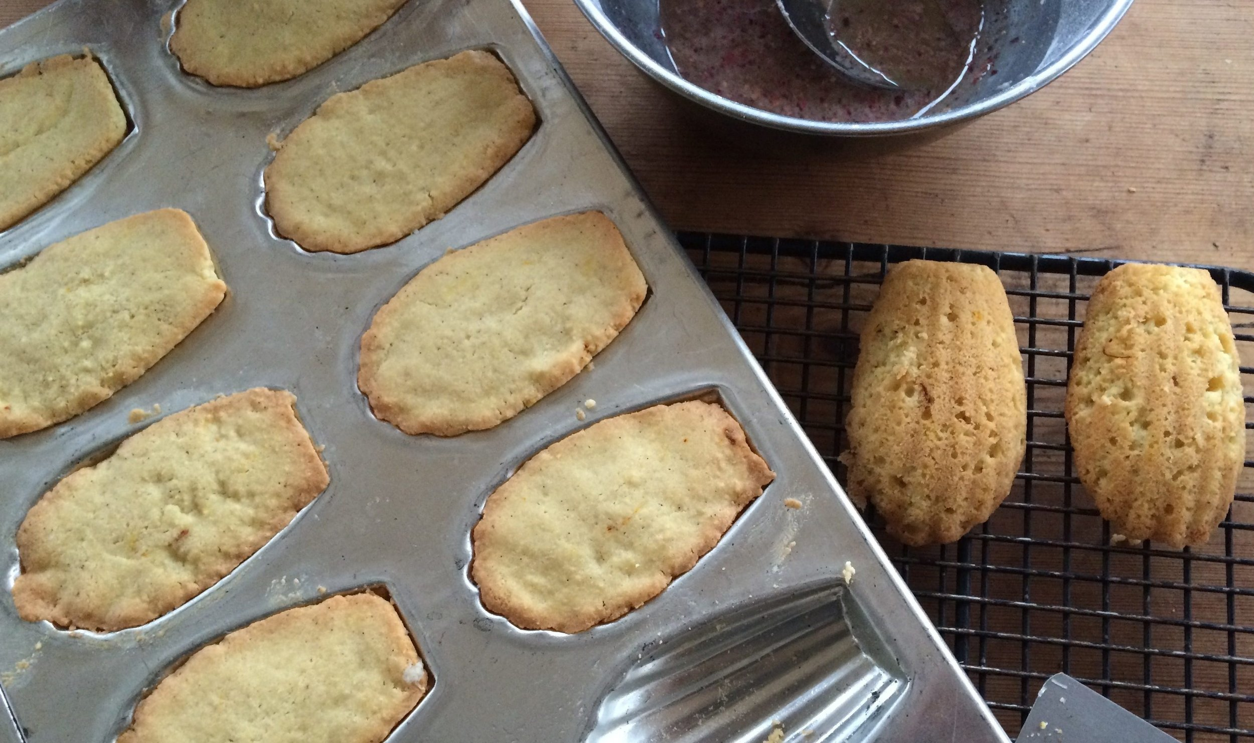 to the rescue: dogs + baking on a raisin and a porpoise