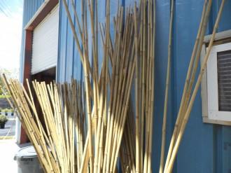 Bamboo Poles-Garden Supply.jpg