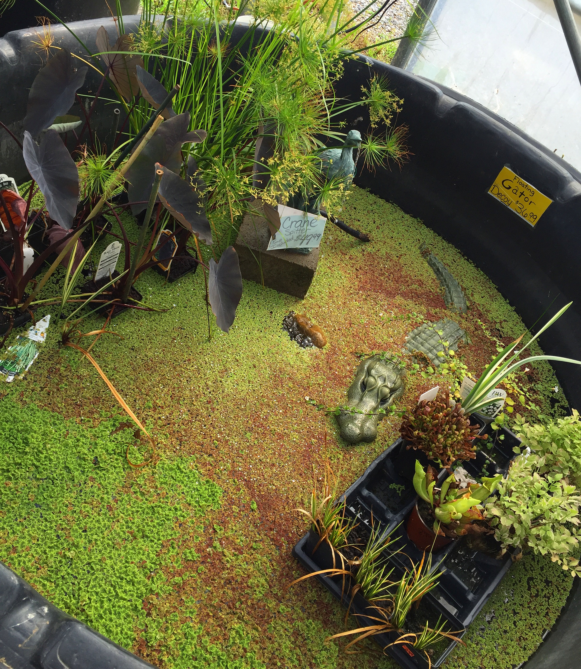 Pond Plants.JPG