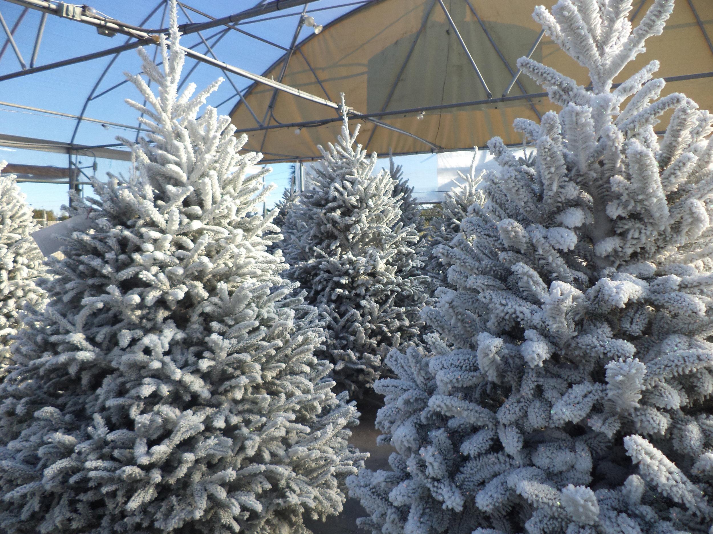 Christmass Tree 2.JPG