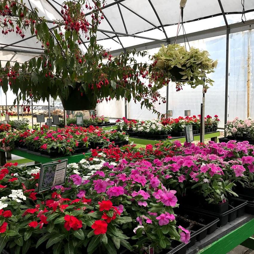 Landscape Plants Rose Garden And Pet Store