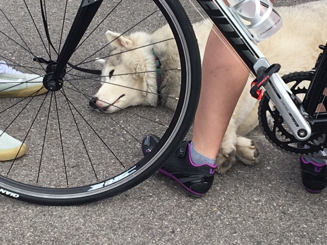 A hilarious dog at the start line.