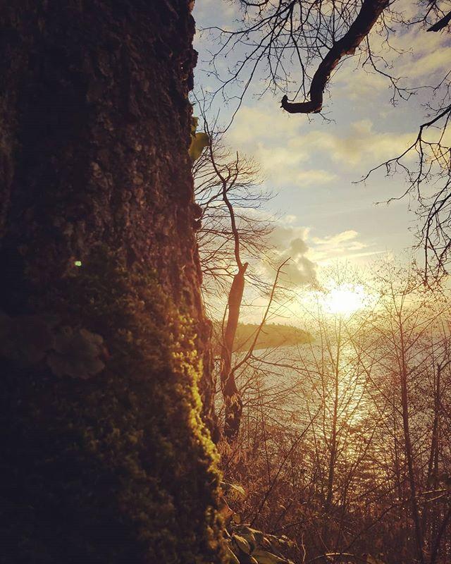 Beautiful walk and sunset through Seattle's great Carkeek Park. . . . . #lovethepnw #seattlesunset #sunsetphotography #salishsea #pugetsound #inspired #nature #rechargetobuildmore #crescentbuildseattle #love #carkeek #seattle