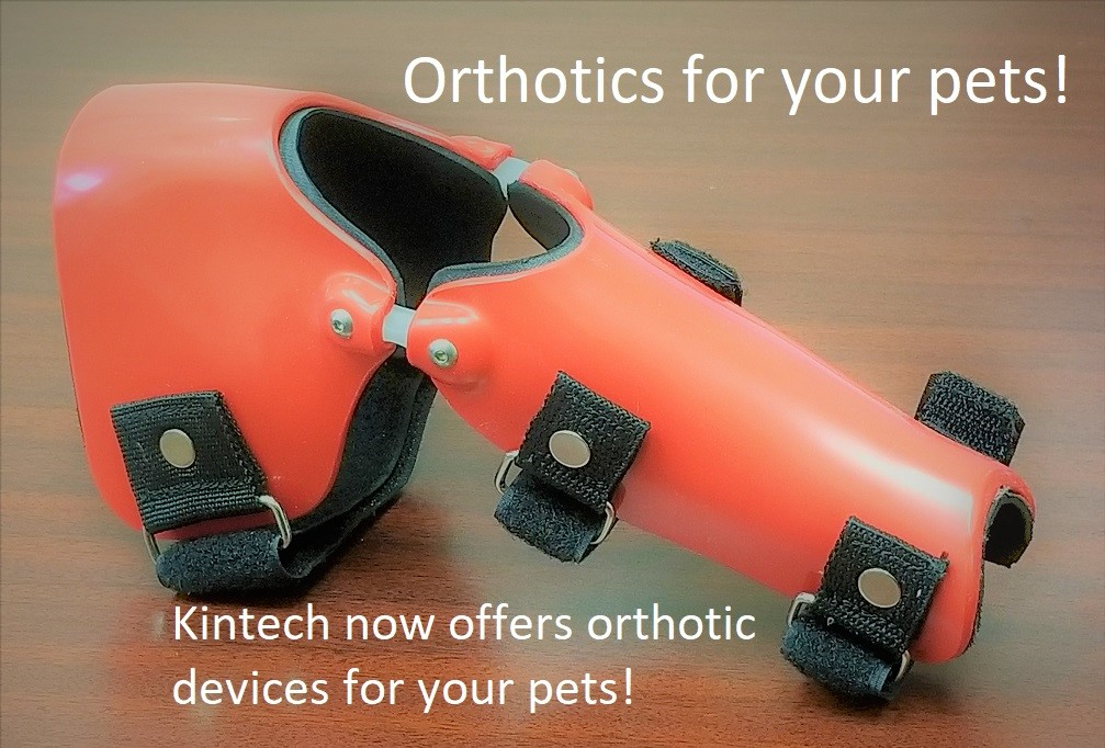 Pet orthotics