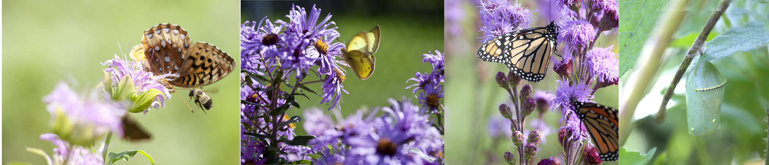 butterflybanner.jpg