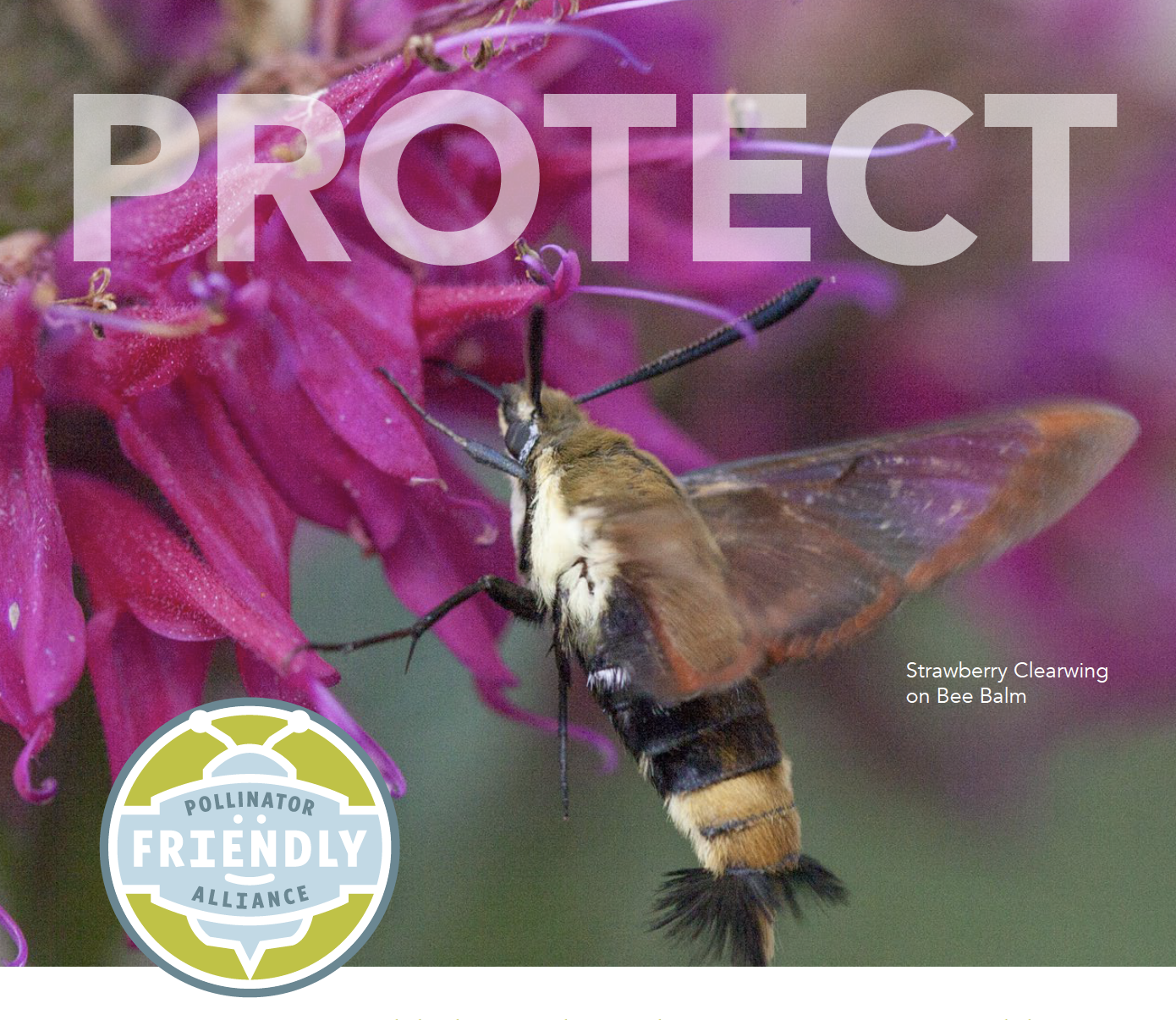 Pollinator Friendly Alliance Newsletter