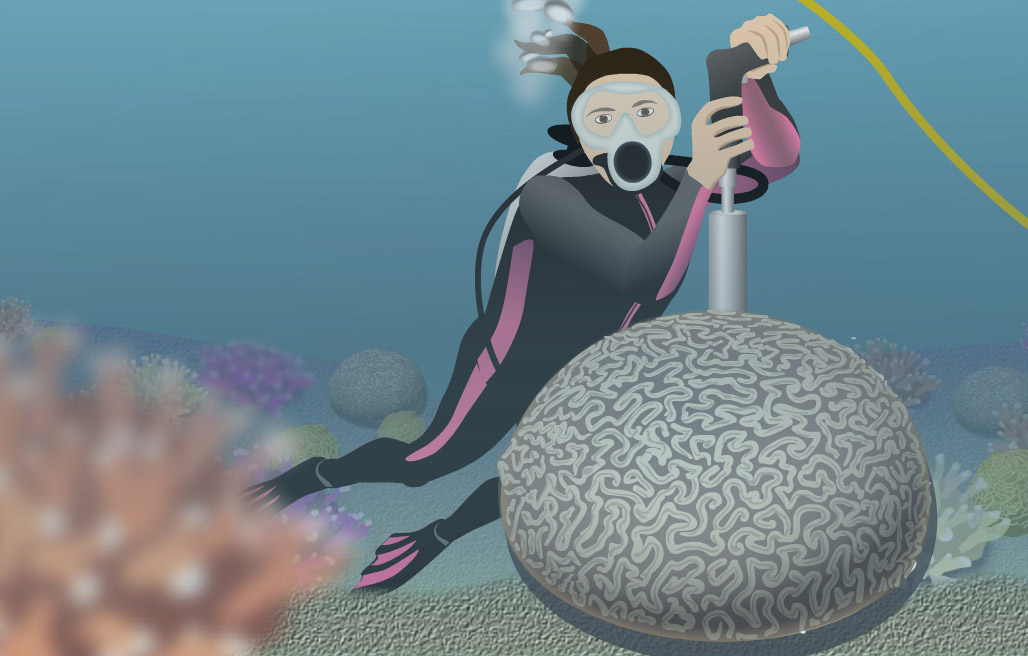 Coral with Diver.jpg
