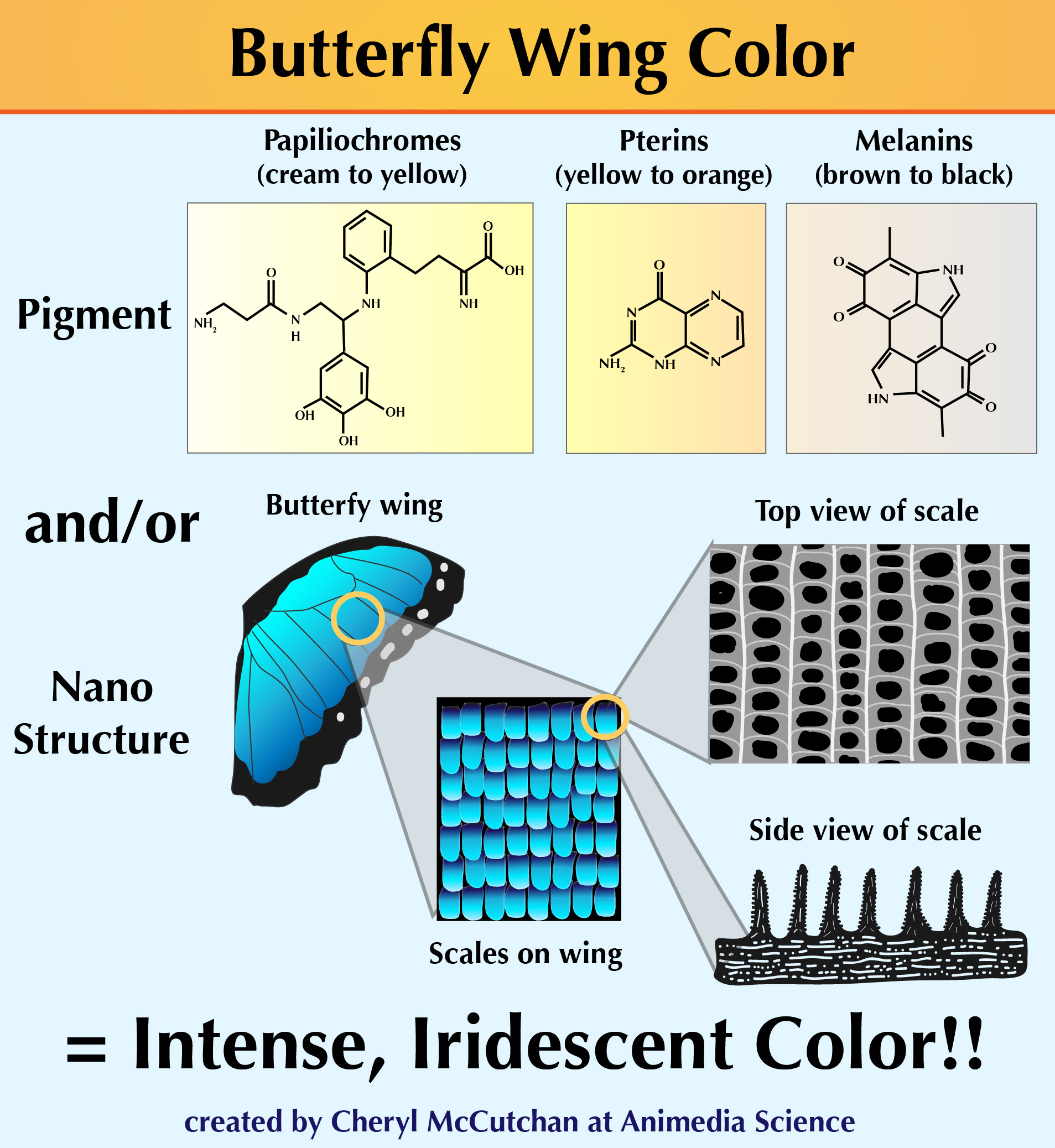 Butterflywing colors 2-01.jpg